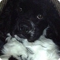 Adopt A Pet :: Roscoe - Kannapolis, NC