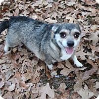 Adopt A Pet :: Allie - Little Compton, RI