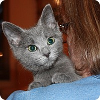 Adopt A Pet :: Miss Bliss - Washington, DC