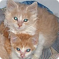 Adopt A Pet :: Blinkin - Pittstown, NJ