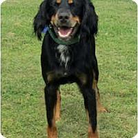 Adopt A Pet :: Tyler - DeKalb, IL