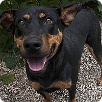 Adopt A Pet :: Sally ADOPTED!! - Antioch, IL