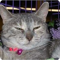 Adopt A Pet :: Thursday - Chesapeake, VA