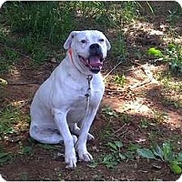 Adopt A Pet :: Buck- Courtesy Listing - Killen, AL