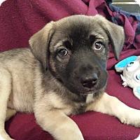 Adopt A Pet :: Phoebe Pup - Marietta, GA