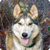 Adopt A Pet :: Max - Ashland, OR