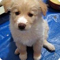 Adopt A Pet :: Lucas - Minneapolis, MN