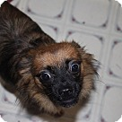 Adopt A Pet :: Lacey