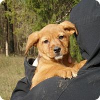 Adopt A Pet :: Julia - Chicago, IL