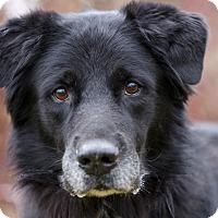 Adopt A Pet :: VADER - Ile-Perrot, QC