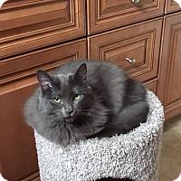 Adopt A Pet :: Connie & Gigi - Walnut Creek, CA