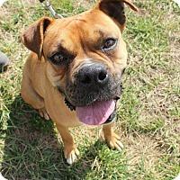 Adopt A Pet :: Elsa - Brentwood, TN