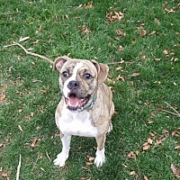 Adopt A Pet :: Suzie - Westminster, MD