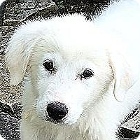 Adopt A Pet :: Trooper - Kyle, TX