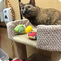 Adopt A Pet :: Miss Kitty - Winchester, CA