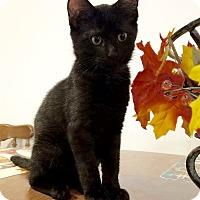 Adopt A Pet :: Mya - Millersville, MD