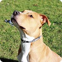 Adopt A Pet :: Brautty - Troy, MI