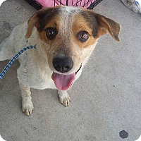 Adopt A Pet :: Ledger - Jarrell, TX