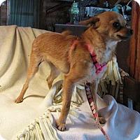 Adopt A Pet :: Foxy - Mountain Home, AR
