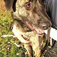 Adopt A Pet :: Delaware: active, playful boy - Kirkland, WA