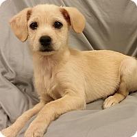 Adopt A Pet :: Denny - Saddle Brook, NJ