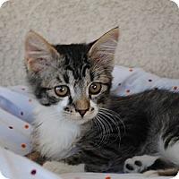 Adopt A Pet :: Zedla & Ziggy - Palmdale, CA