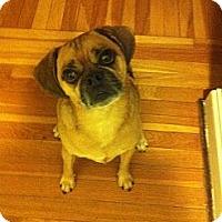 Adopt A Pet :: Napoleon - San Francisco, CA