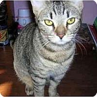 Adopt A Pet :: Nala - Reston, VA