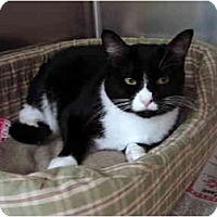Adopt A Pet :: Midnight - Greenville, SC