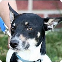 Adopt A Pet :: Jackie - kennebunkport, ME