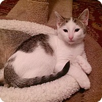 Adopt A Pet :: Rudy - Southington, CT