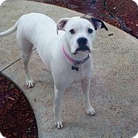 Adopt A Pet :: Cali - Yorba Linda, CA