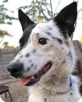 Dog Adoption Bellevue Ne