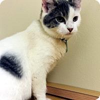 Adopt A Pet :: Rick - Edmond, OK