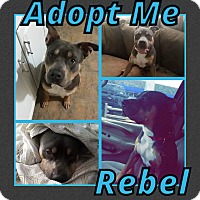 Adopt A Pet :: Rebel - Cheney, KS