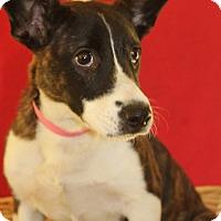 Adopt A Pet :: Ecko - Waldorf, MD