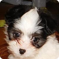 Adopt A Pet :: Bug - MINNEAPOLIS, KS