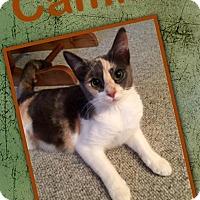Adopt A Pet :: Camilla - McDonough, GA