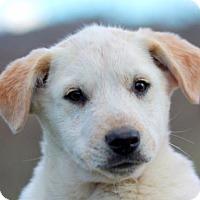 Adopt A Pet :: Frasier - Brattleboro, VT