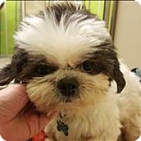 Adopt A Pet :: Petey Patches - Neosho, MO