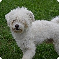 Adopt A Pet :: Chico - Tavares, FL