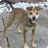 Adopt A Pet :: Scruffy - Tomah, WI