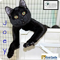 Adopt A Pet :: Joey - Covington, LA