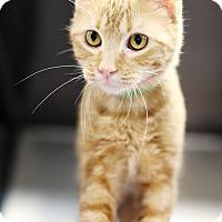 Adopt A Pet :: Sparkles *Petsmart* - Appleton, WI