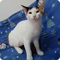 Adopt A Pet :: Zippy - China, MI