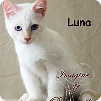 Adopt A Pet :: Luna - Oklahoma City, OK