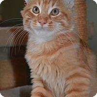 Adopt A Pet :: Am Litter Marley - Adopted 12.04.16 - Williamston, MI