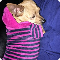 Adopt A Pet :: Tess - Tracy, CA