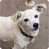 Adopt A Pet :: Sandie - Portland, OR