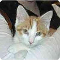 Adopt A Pet :: Pecan - Arlington, VA